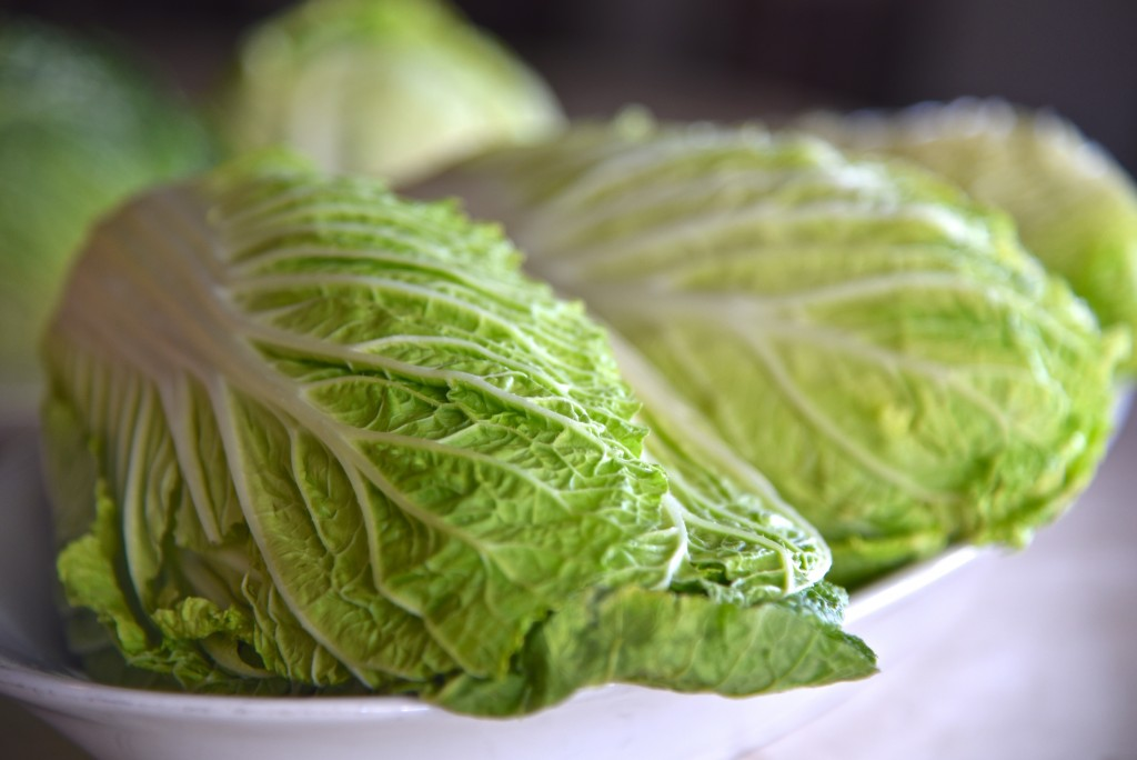 Napa Cabbage-DSC_9076