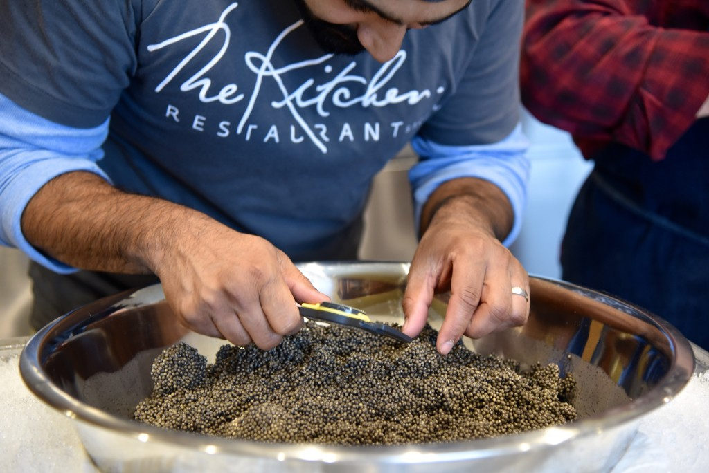 Caviar Harvesting-Passmore Ranch-Jan 2015-DSC_0697